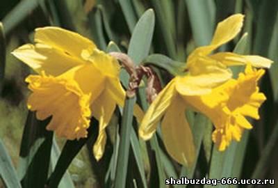 Топ-10 ядовитых цветов рядом с вами (ФОТО)