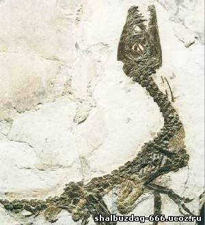 Динозавры размером с курочку