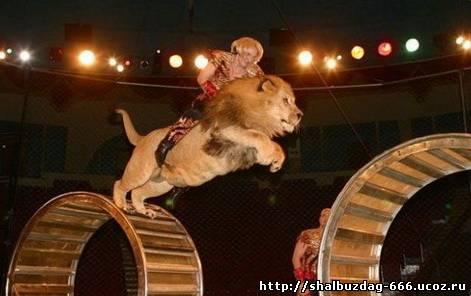 Самый длинный прыжок верхом на льве.