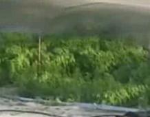 Гигантская плантация марихуаны в Мексике