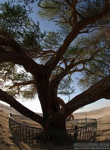 Дерево жизни — Шаджарат-аль-Хайят