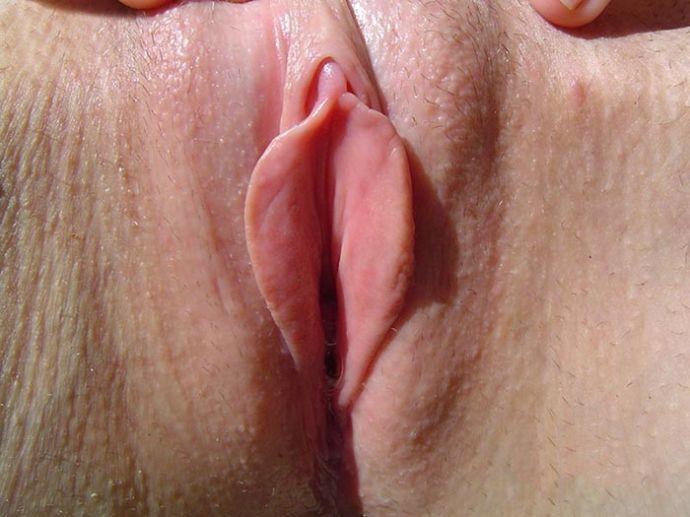 большие губки половые фото